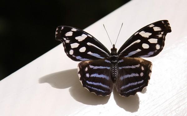 Tapeta na plochu pc s názvem motýl